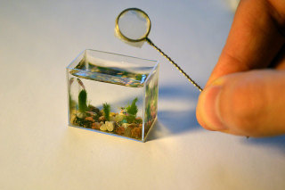 World's smallest aquarium: © Anatoly Konenko