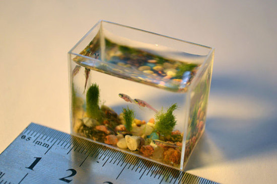 World's smallest aquarium, measured in millimeters: © Anatoly Konenko