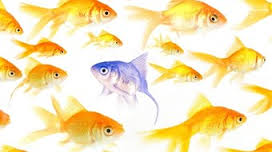 Which direction is the central fish swimming? (example only): image via presentationmagazine.com