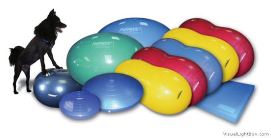FitPAWS balance products for dogs: ©Ball Dynamics