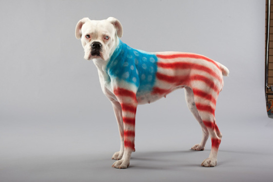 PetPaint Flag dog: image via petpaint.com