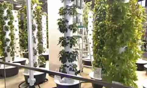 Aeroponic Garden Inside O'Hare Internatiional Airport (You Tube Image)