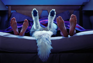 Pets in bed: image via WebMD.com