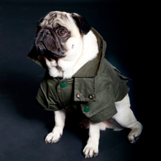 Green Waterproof Coat for Pugs: ©Trendy4Paws