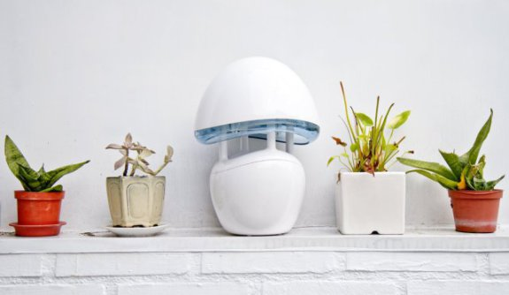 The InaTrap Electronic Insect Killer and Elegant Night Light