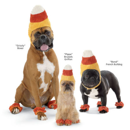Candy Corn Dog Halloween Costume: image via inthecompanyofdogs.com