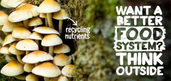 The cap of a mushroom recycles nutrients: image via biomimicry.skipsolabs.com/