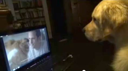 Isn&#039;t that cute? Snooky is watching a dog commercial!: image via theinspirationroom.com