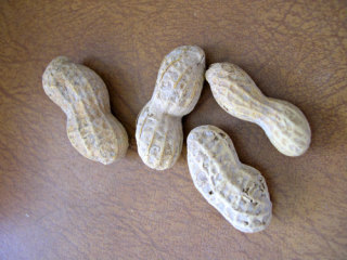 Peanut Allergies are on the Rise
