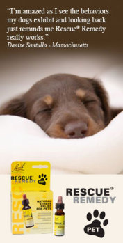 Rescue Remedy Pet by Nelsons Bach