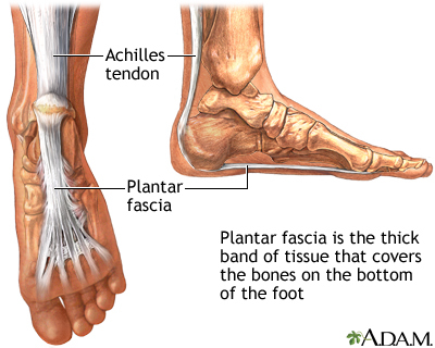 Plantar fascia: Image: PubMed Health