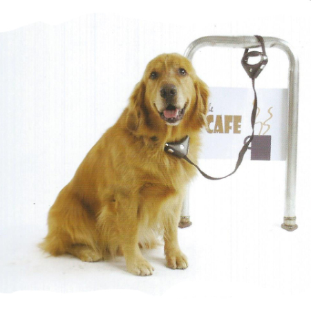 Safespot Locking Leash & Collar
