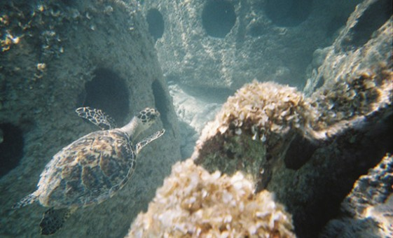 Eternal Reefs (Image via Eternal Reefs)