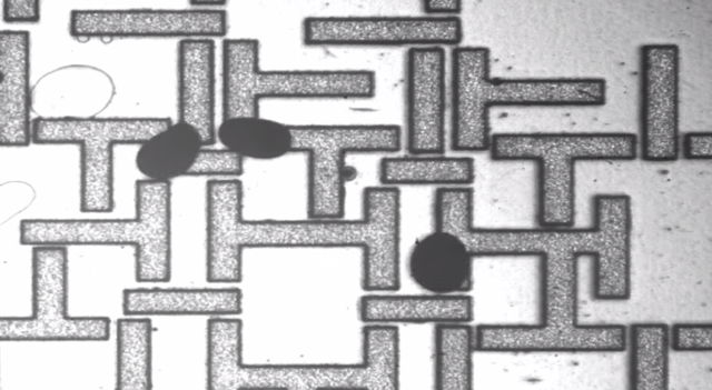 A new type of circuit: this novel circuit relies on magnetically manipulated droplets of water. Image: screenshot from video below.