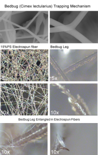 Images of material and bed bug legs at various magnifications: image via fibertrap.com