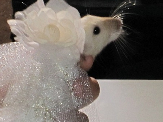 Rat Lily in Ada Nieve's couture wedding dress...: Photo by Tim Gorta/DNAinfo.com