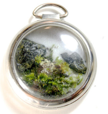 Pocket Watch Terrarium by Jose Agatep