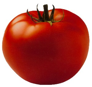 The powerful tomato: photo by Toni Lydecker via sallybernstein.com