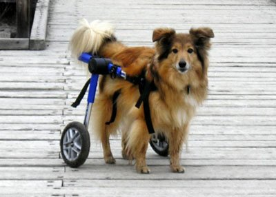 Walkin' Wheels (rear) Dog Wheelchair