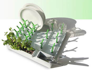 Innovative Dish Drainer with Herbs